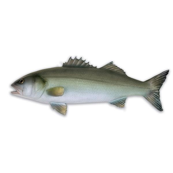 [해외]OMER Seabass Fish Exposure