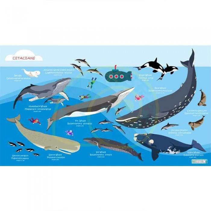 [해외]OCEANARIUM Cetaceans L 10137681028 Blue / Multicolor