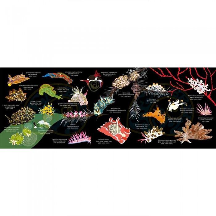 [해외]OCEANARIUM Nudibranch S 10137681037 Black / Multicolor