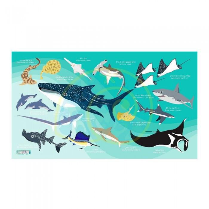 [해외]OCEANARIUM Sharks M 10137681042 Green / Multicolor